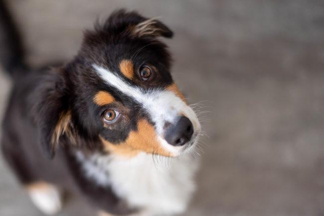 Zwo vous raconte #3 – Portrait d'un p'tit chien noir